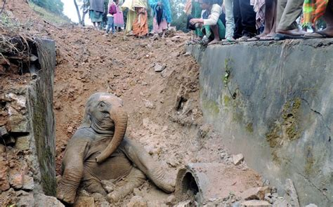 Baby elephant pulled from hole