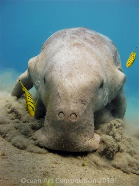 1st Place Compact Behavior Category - Underwater