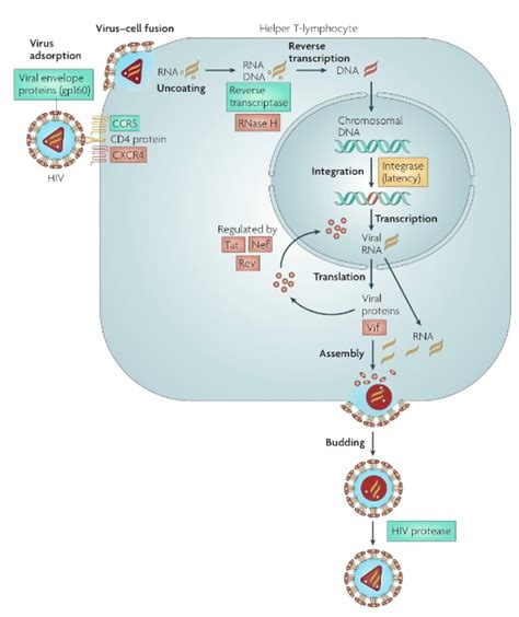 Group:SMART:HIV-1 Subtype C Protease - Proteopedia, life in 3D
